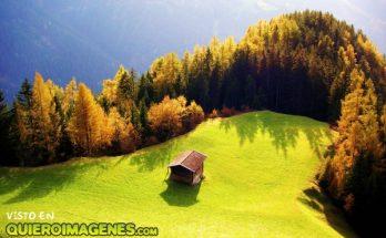 Cabaña perdida en el bosque imágenes