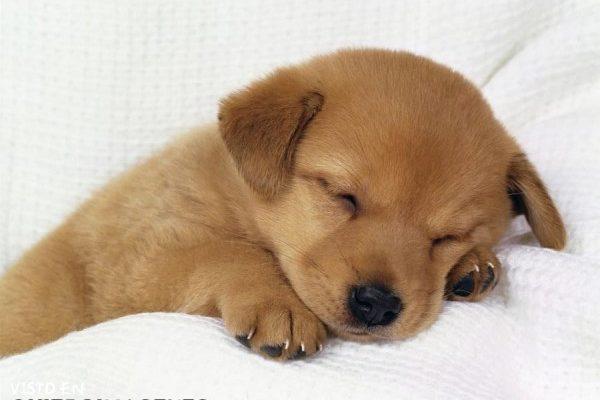 Cachorro durmiendo imágenes