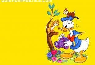 El pato Donald enfadado con las ardillas imágenes