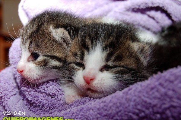 Dos lindos gatitos imágenes