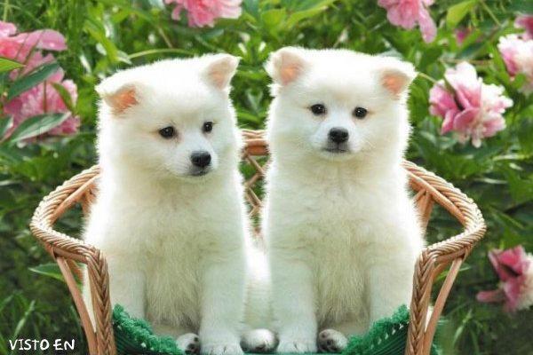 Dulces cachorritos imágenes