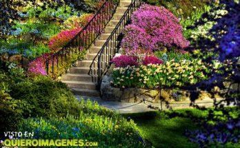 Un jardín a todo color imágenes