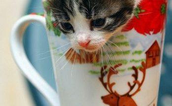 Gatito navideño imágenes