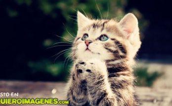Un lindo gatito rezando imágenes