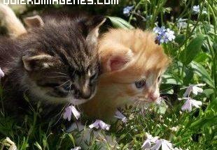 Gatitos en el prado imágenes