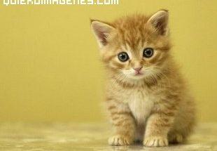 El gato mas lindo imágenes