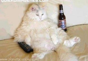 El gato Homer simpson imágenes