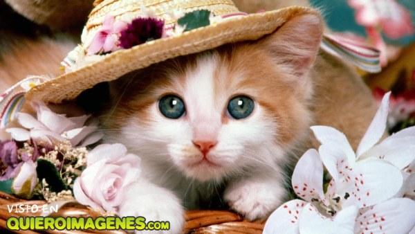 Un gatito con sombrero imágenes