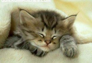 Gatito adormilado imágenes