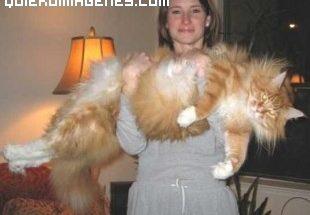 Un gato enorme imágenes