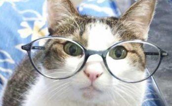 Mi gato tiene un blog imágenes