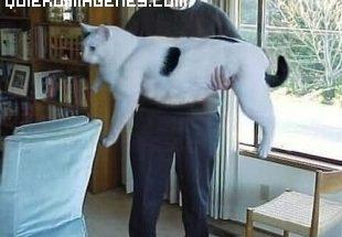 Un gato gigante imágenes