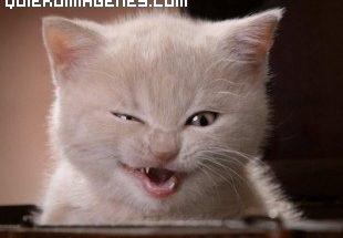 Gato malicioso imágenes