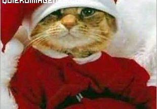 Un gato muy navideño imágenes