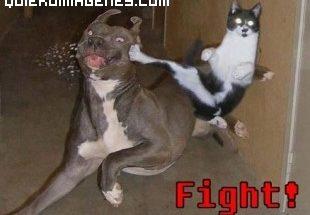 Gato luchador imágenes