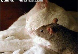 Rata junto a un gato imágenes