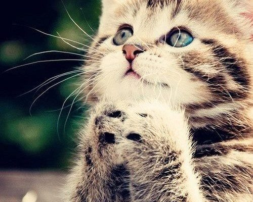 Gatito rezando imágenes