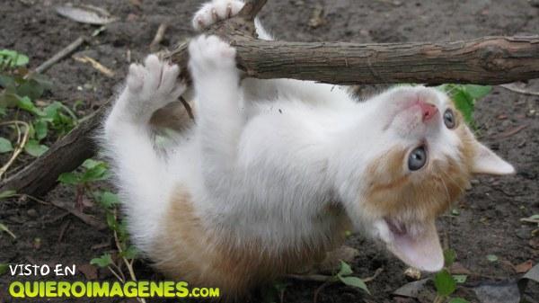 Gato trepando por la rama imágenes