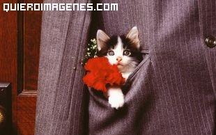 Imagen de gatito en chaqueta imágenes