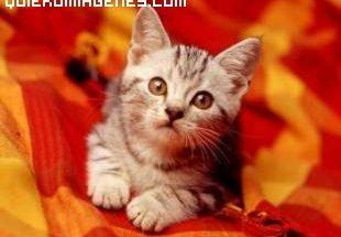 imagen de un dulce gatito imágenes