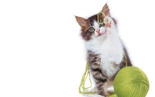Imagen de un gato y su pelota imágenes
