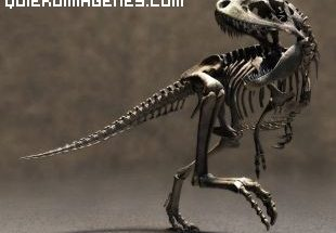 Esqueleto fosil de Velociraptor imágenes