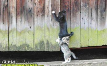 Dos gatos que se ayudan imágenes