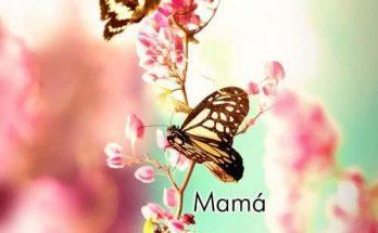 El amor de una madre imágenes