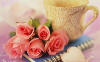 Una café y rosas imágenes
