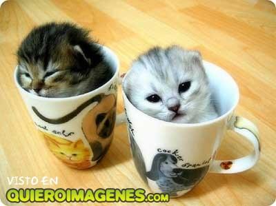 Dos gatitos en tazas imágenes