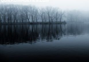 Niebla desde el lago hacia el bosque imágenes