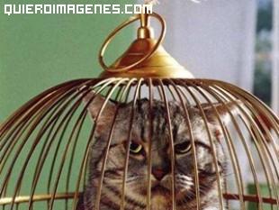 Gato enjaulado imágenes