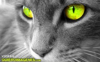 Mirada felina imágenes