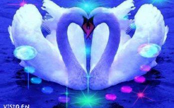 Dos cisnes imágenes