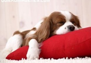 Durmiendo la siesta imágenes