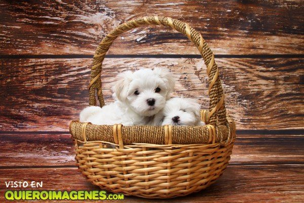 Dos cachorros en una cesta imágenes