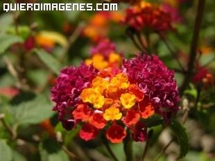 Preciosa planta exotica imágenes