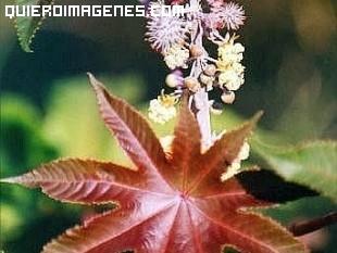 Planta con forma de estrella imágenes