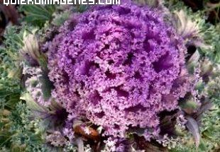 Colorida planta imágenes