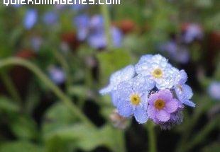 Colorida flor imágenes