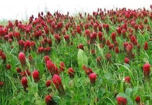 Plantas rojas imágenes
