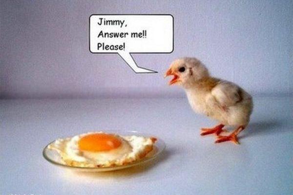 ¡Jimmy contéstame! imágenes
