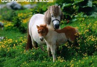 Imagen de familia de ponis imágenes