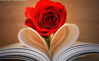 Rosa y corazón imágenes