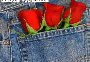 Rosas rojas para un regalo informal imágenes