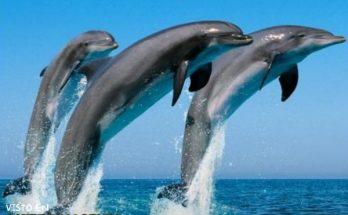 Salto del delfín imágenes