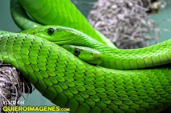 La gran serpiente imágenes