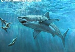 El tiburón imágenes