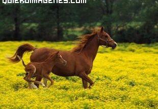Imagen de una yegua y su potro imágenes